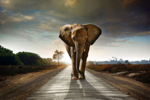 FreeGreatPicture.com-52305-elephant